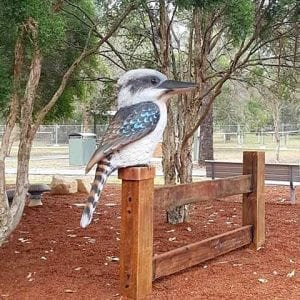 kookaburra in play area