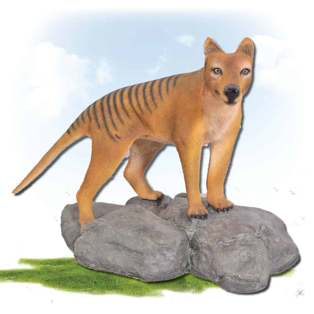 Tasmanian Tiger - Thylacine on rock - tree standing sculpture photo
