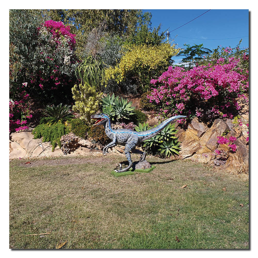 Velociraptor - Blue - Standing - life-size statue - showing dinosaur in customers garden