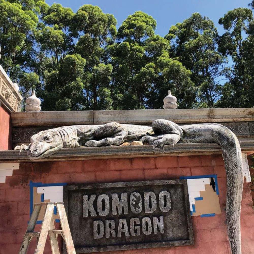 Komodo Dragon - Tail Hanging - Large - Insitu -