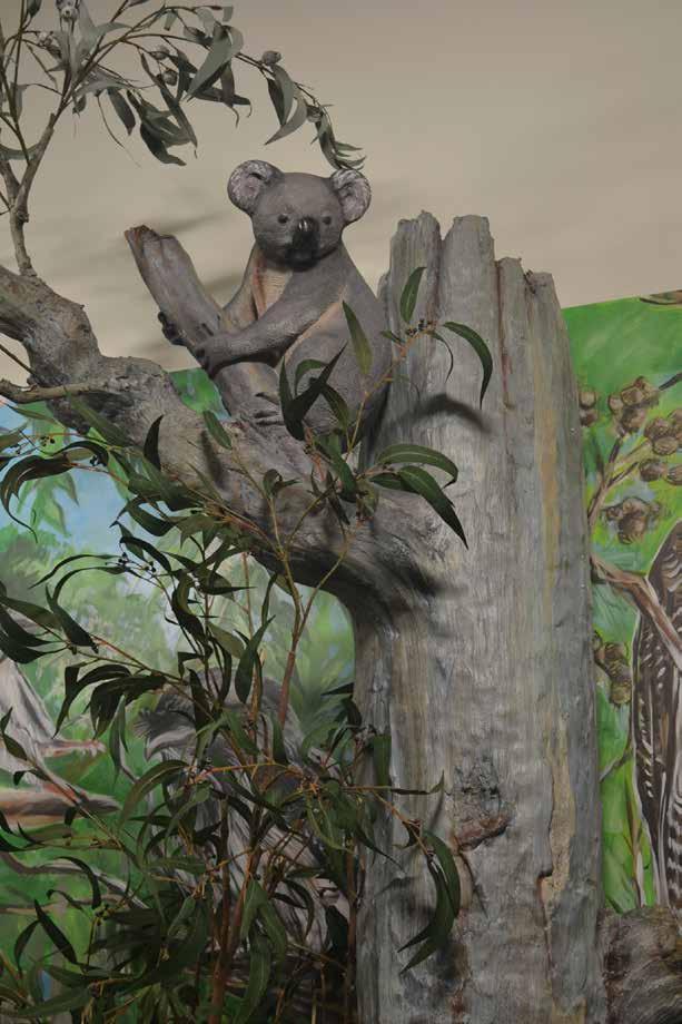 Koal in tree