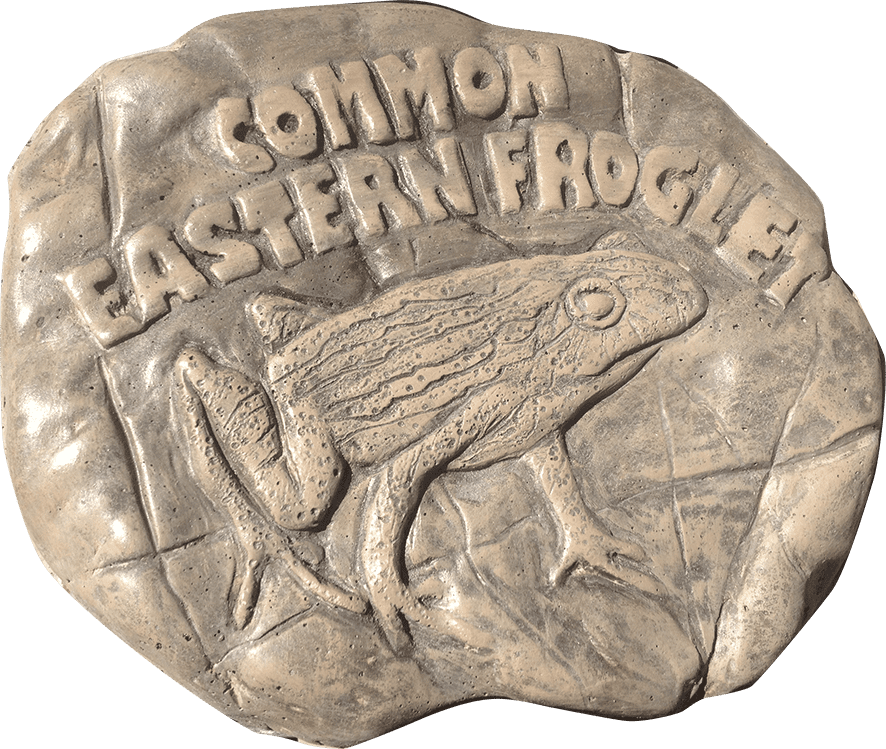 Common Eastern Froglet Stepping Stone