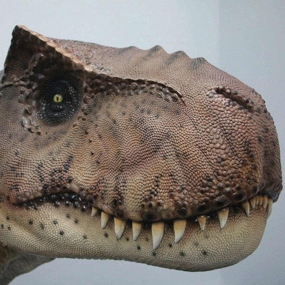 Tyrannosaurus Rex – 152cm high – 190136