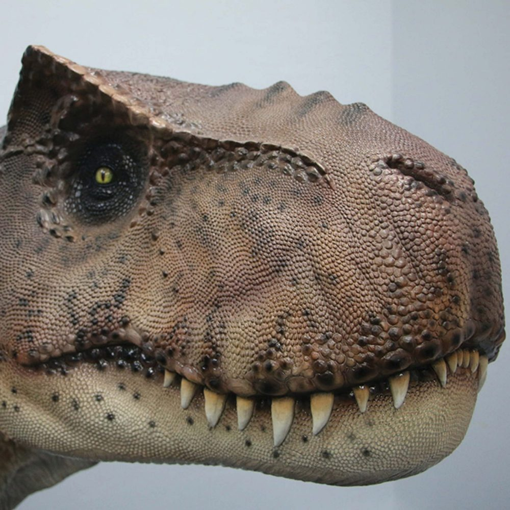 TyrannosaurusRex–cmhigh–
