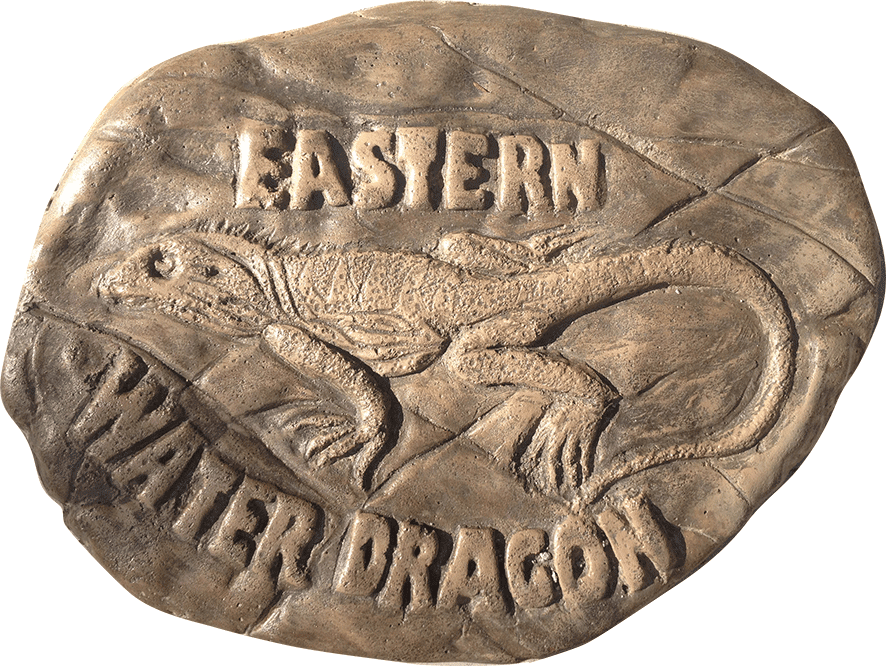 Eastern Water Dragon Stepping Stone