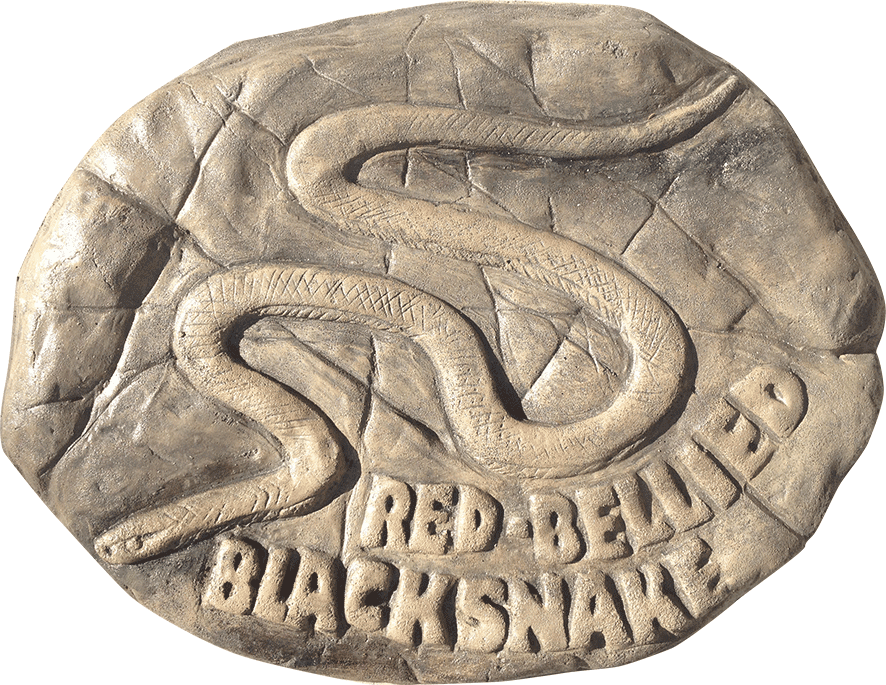 Red Bellied black snake - stepping stone