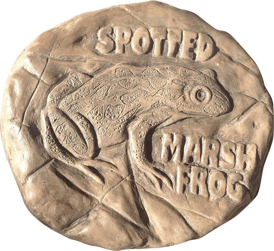 Spotted Marsh Frog Stepping Stone