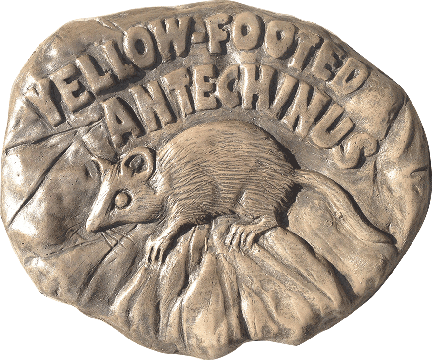 Yellow footed antechinus stepping stone