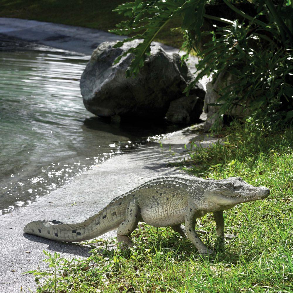 Crocodile hatchling 4ft in a walking pose - 080112