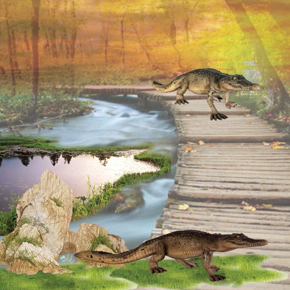 Crocodile 4ft walking - side view on boardwalk