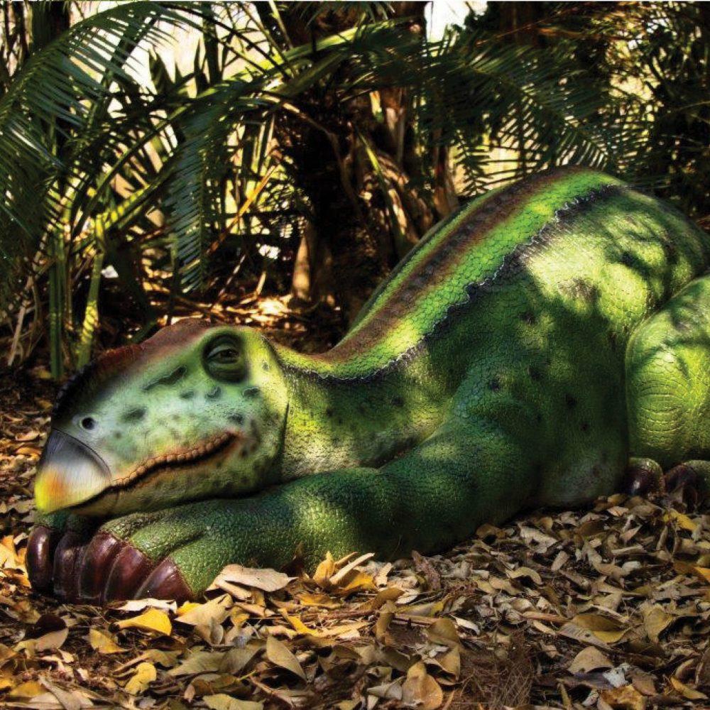 Muttaburrasaurus dinosaur sleeping – life-size replica – Australian