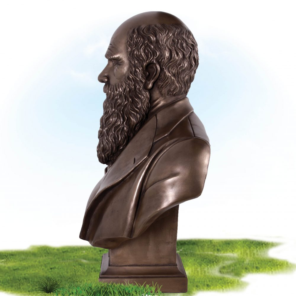 Charles Darwin Bust on base- Bronze finish - rear view