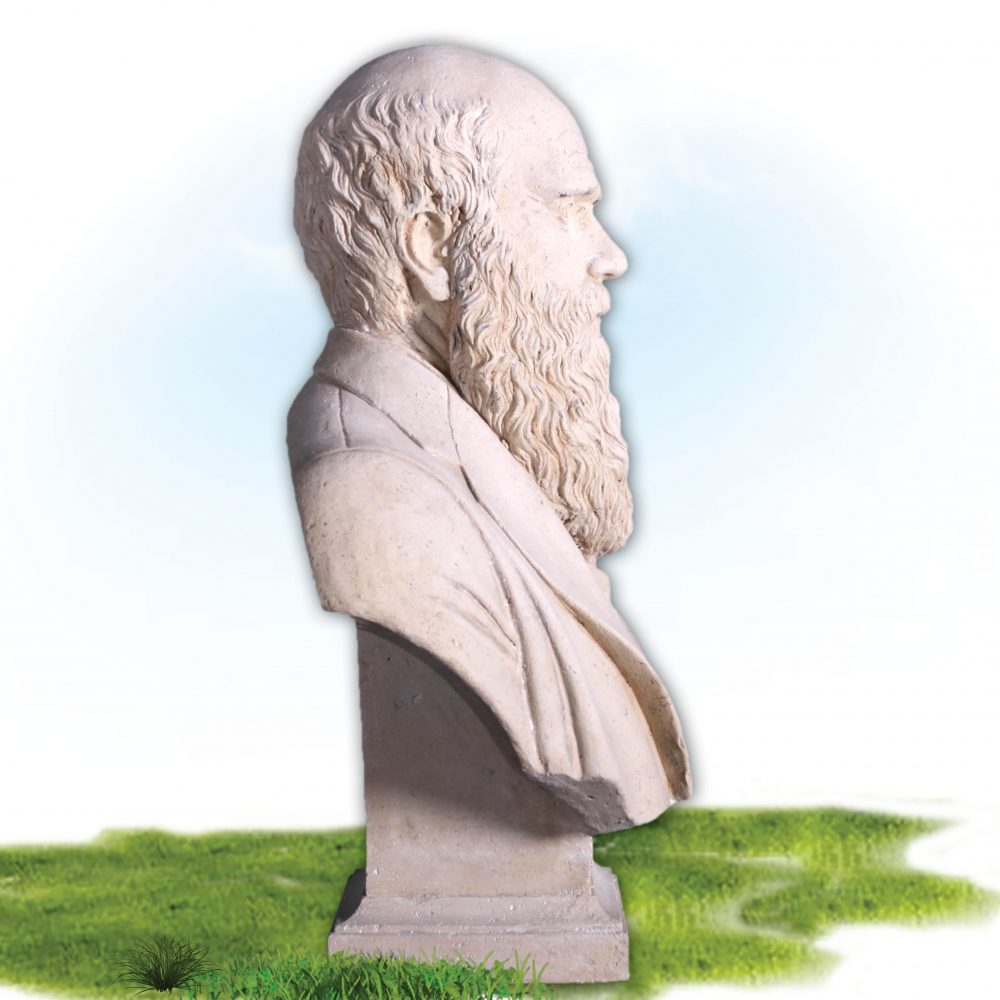 Side View Charles Darwin Bust – Reproduction with Roman stone finish