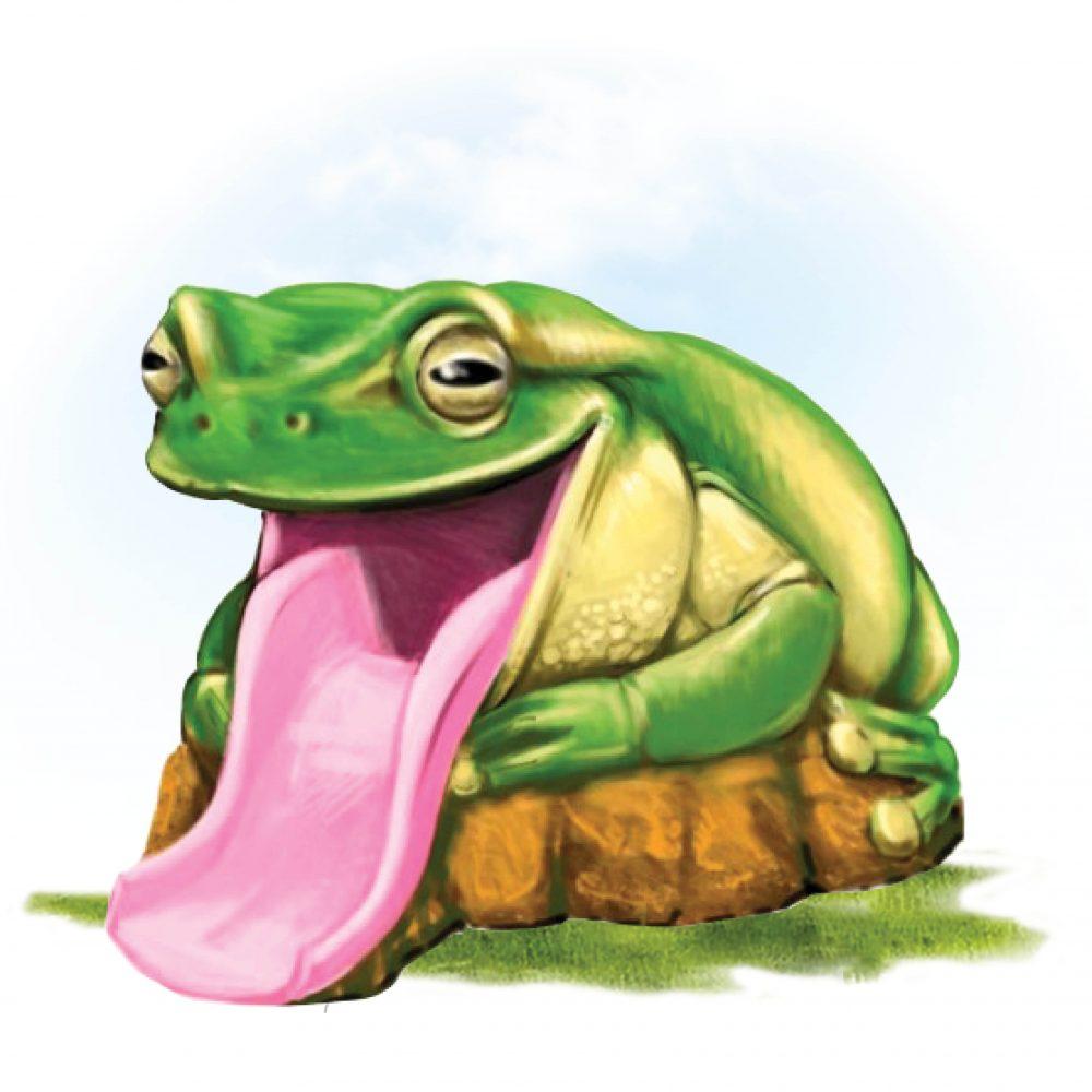 Frog Slide – Australian Green Tree Frog slide