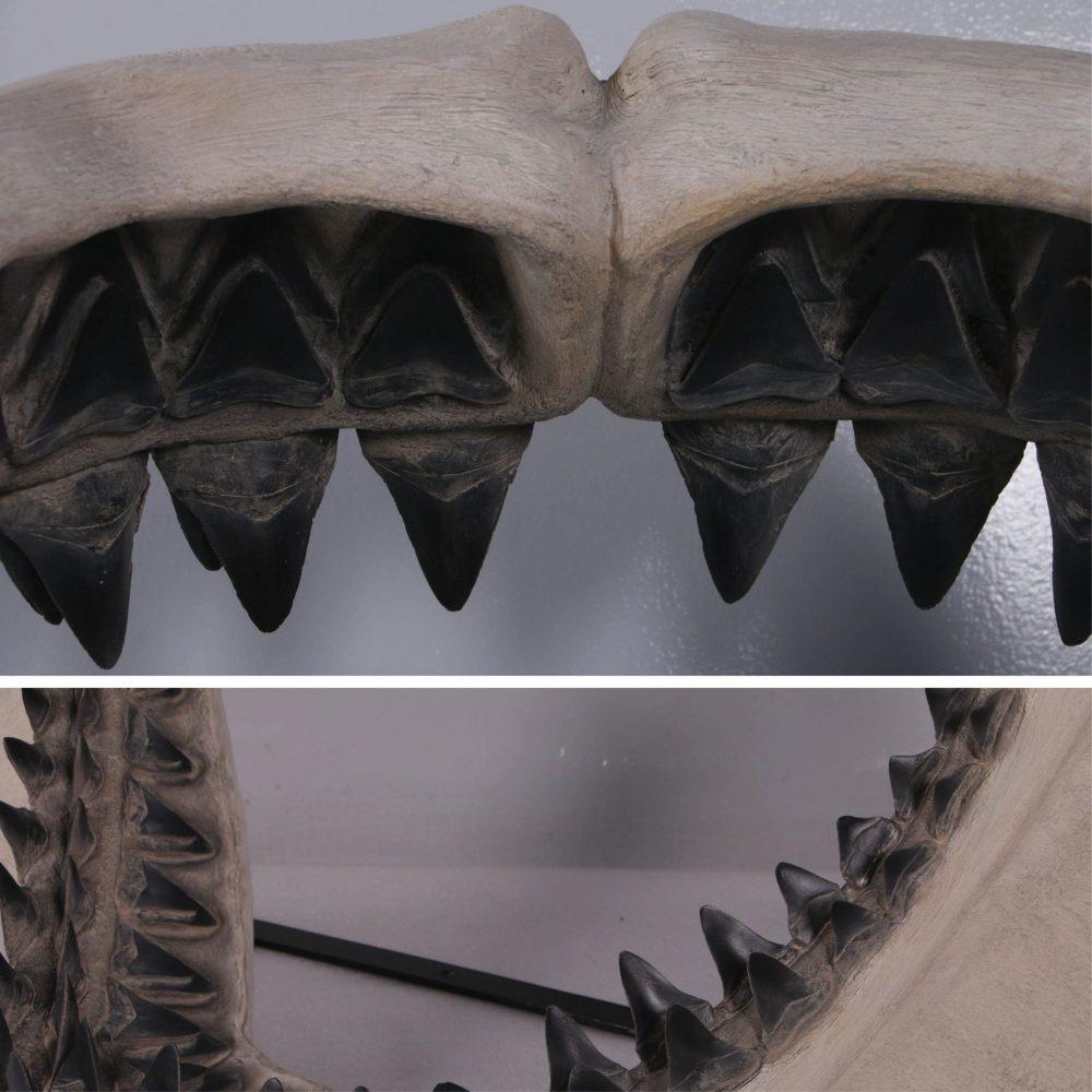 Close up of the sharp teeth Giant Prehistoric Megalodon shark teeth replica