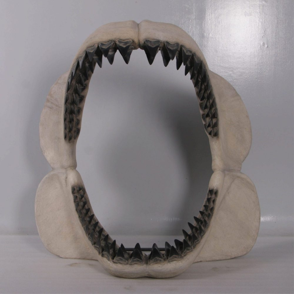Megalodon Jaw Giant Prehistoric Shark  front view Image  scaled