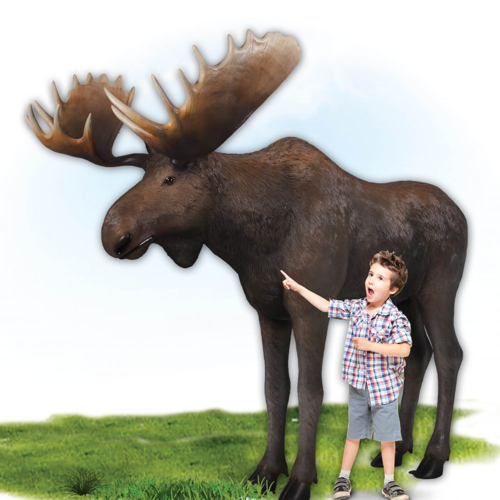 Moose standing - Life-size_brown with antlers- forest animal
