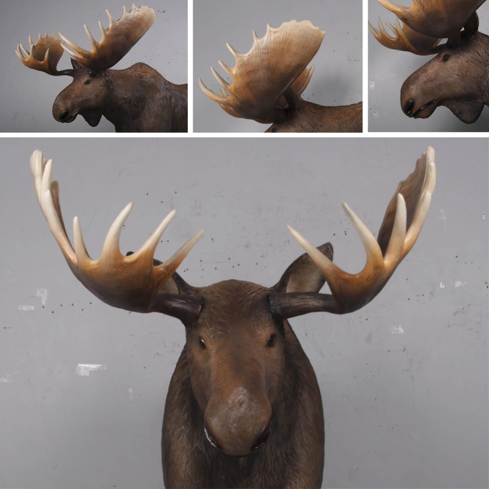 Moose standing - Life-size_brown with antlers- forest animal - Various View