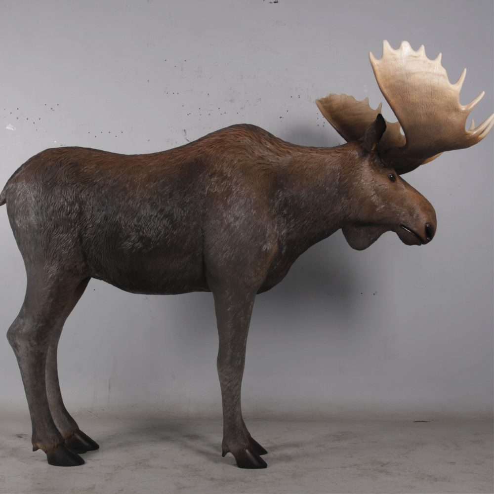 Moose standing - Life-size_brown with antlers- forest animal -side view
