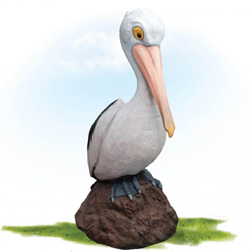 Pelican 2_5m on Bommie